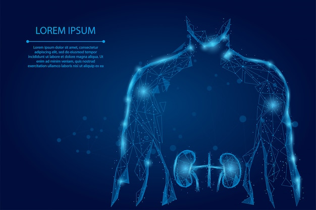 Man silhouet gezonde nieren laag poly draadframe. lage poly urologie systeem geneeskunde behandeling