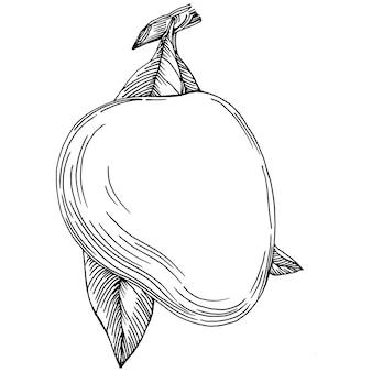 Mango tropisch fruit schets tekening
