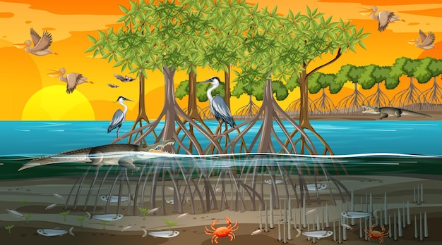 Mangroveboslandschapsscène bij zonsondergang met veel verschillende dieren