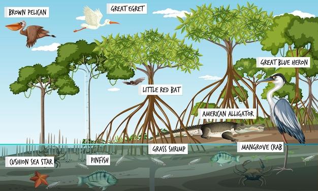 Mangroveboslandschapsscène overdag met veel verschillende dieren