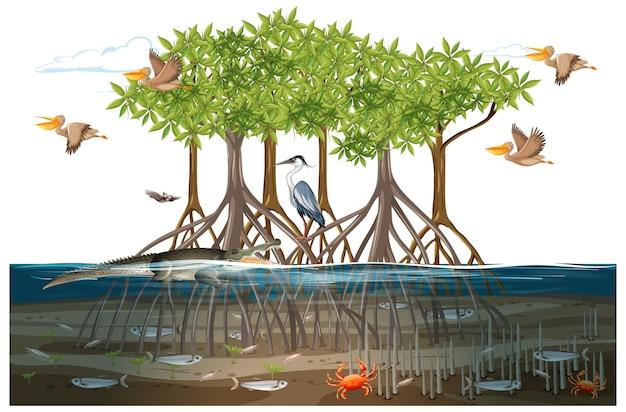 Mangrovebosscène met dieren in het water