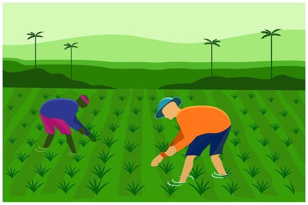 Mannelijke boeren werken aan rijstveld vectorbeelden Premium Vector