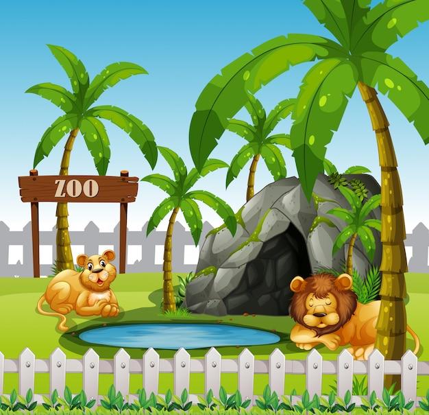 Mannelijke en vrouwelijke leeuw in de dierentuin