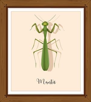 Mantis op houten frame