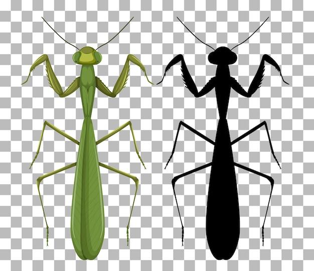Mantis op transparante achtergrond