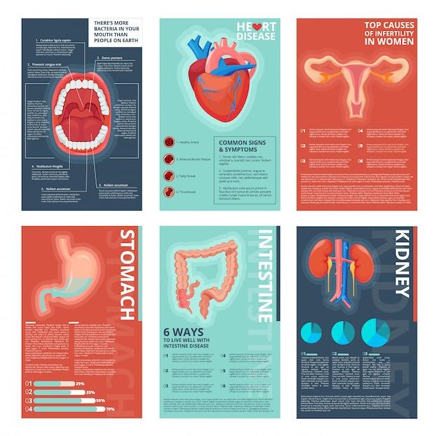 Medische infographic pagina's. gezondheid spijsverteringssystemen gezondheidszorg menselijke biologie vector catalogus sjabloon