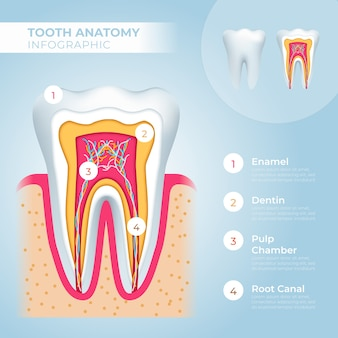 Medische infographic sjabloon en tandanatomie