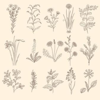 Medische kruiden schets. botanische bloementherapie natuurlijke planten met bladeren bloemen collectie.