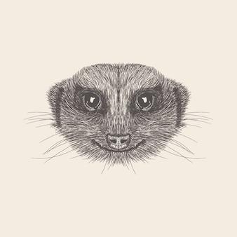 Meerkat illustratie van hand getrokken ontwerp