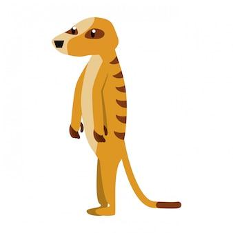 Meerkat wild dier
