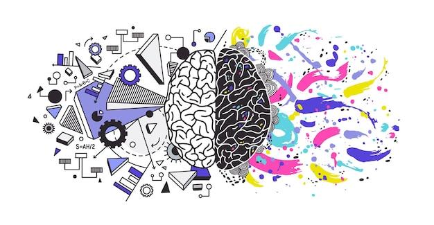 Menselijk brein verdeeld in rechter en linker hersenhelften die verantwoordelijk zijn voor verschillende functies - respectievelijk creativiteit of kunst en logisch of logisch denken. kleurrijke moderne vectorillustratie.
