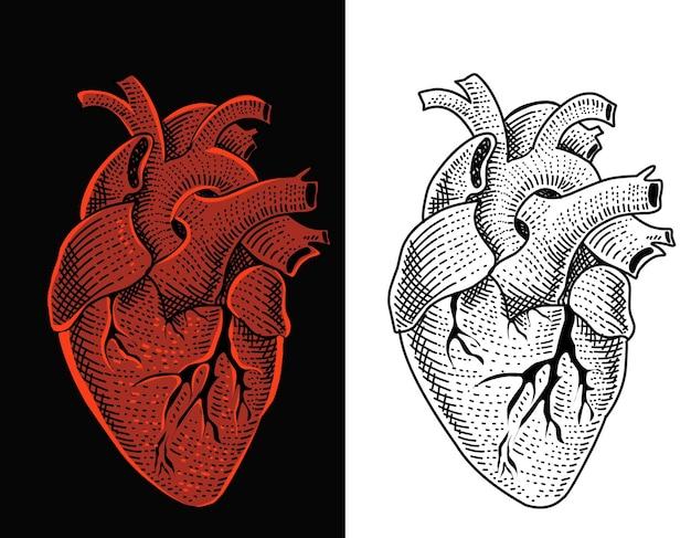 Menselijk hart gravure