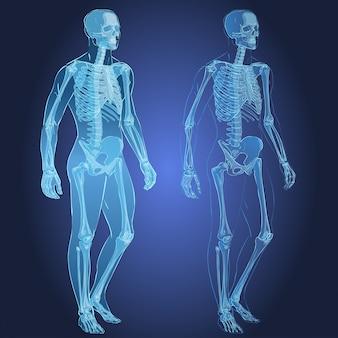 Menselijk lichaam en skelet
