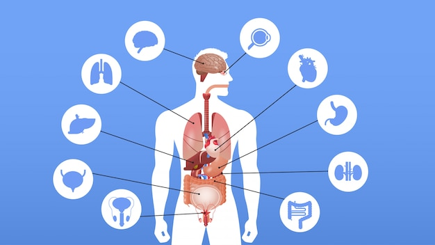 Menselijk lichaam structuur infographic poster met interne organen pictogrammen anatomie systeem portret horizontaal