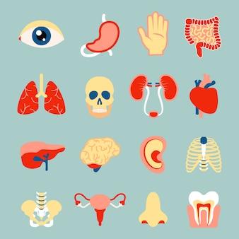 Menselijk lichaamsorganen