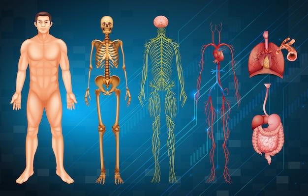Menselijk lichaamssystemen