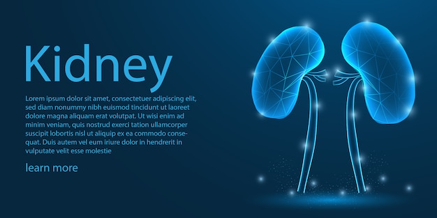 Menselijk nier medisch, laag polyconcept.