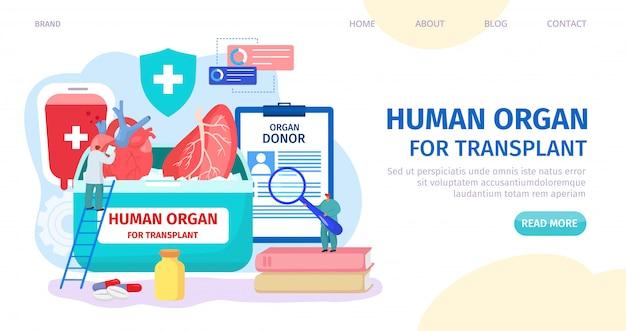 Menselijk orgaan voor transplantatie, donor landing illustratie. clinic webpagina, orgaandonor zoeken. dokter karakter check hart