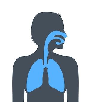 Menselijke ademhalingswegen. vector illustratie