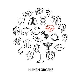 Menselijke anatomie onderwijs plakkaat