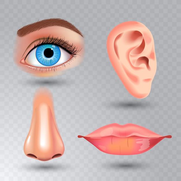 Menselijke biologie, organen anatomie illustratie. realistische stijl. gezicht gedetailleerde kus of lippen en oor, oog of uitzicht, kijk met neus.