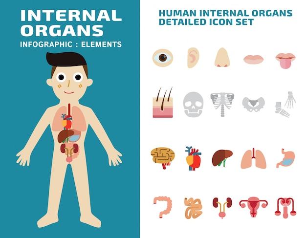 Menselijke interne organen gedetailleerde pictogrammen geplaatst geïsoleerde vectorillustratie