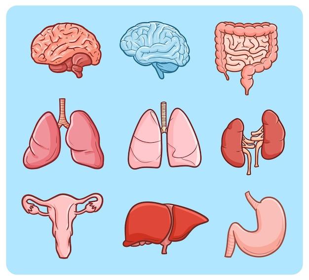 Menselijke interne organen in eenvoudige doodle-stijl