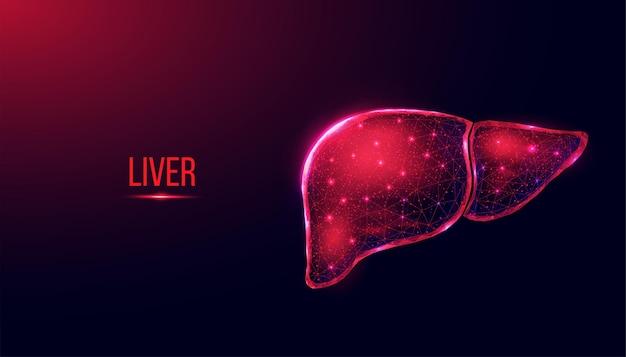 Menselijke lever. wireframe laag poly stijl. abstracte moderne 3d vectorillustratie op donkerblauwe achtergrond.