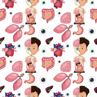 Menselijke lichaamsdelen anatomie naadloze achtergrond