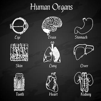 Menselijke organen schoolbord pictogrammen