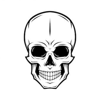 Menselijke schedel illustratie
