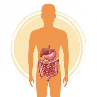Mensensilhouet met spijsverteringssysteem