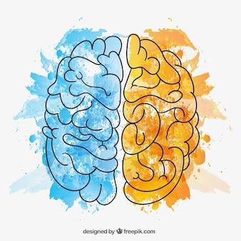 Met de hand beschilderd hersenhelften