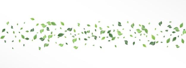 Met gras begroeide blad swirl vector panoramisch witte achtergrond concept. kruiden gebladerte illustratie. bos laat thee poster. groen vervagen banner.