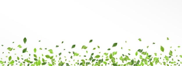 Met gras begroeide bladeren aard geïsoleerd op wit