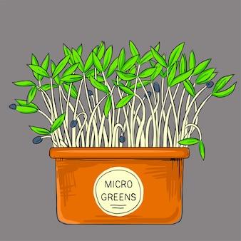 Microgreens groeien in een pot. gezond, biologisch, gezond voedsel. zaden voor het kweken van microgreens