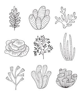 Minimalistische koralen en algen. zeer fijne tekeningen van zeewier, oceaanplanten. botanische onderwaterelementen
