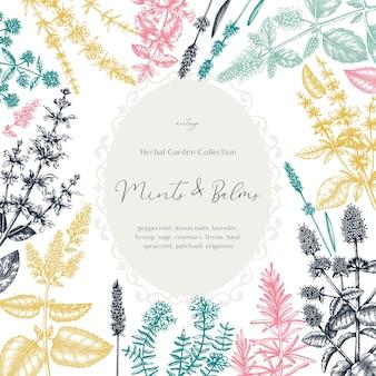 Mints and balsems vintage design in kleur. hand geschetst frame met aromatische en geneeskrachtige kruiden. mint planten frame in vintage stijl.