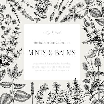 Mints en balsems vintage design. hand geschetst frame met aromatische en geneeskrachtige kruiden. mint planten frame in vintage stijl.