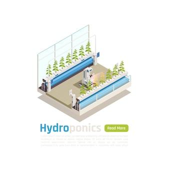 Moderne hydrocultuur broeikasgassen tuinieren isometrische illustratie