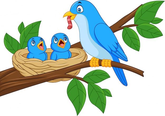 Moeder blauwe vogel voedende baby's in een nest
