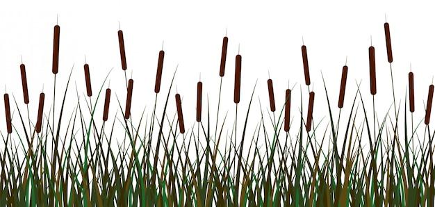 Moeras riet achtergrond. groene moerasriet bruin bloeiwijzen struik met loof.