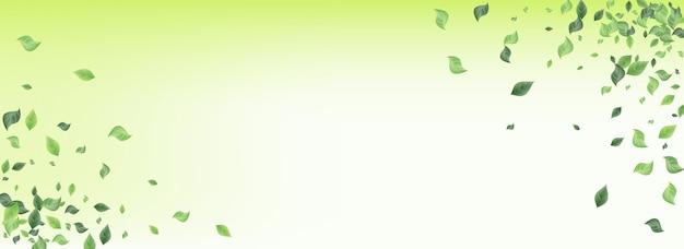 Moerasbladeren organisch geïsoleerd op wit