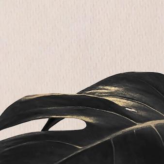 Monstera blad op een beige achtergrond met kopie ruimte