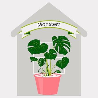 Monstera in een bloempot op de achtergrond van een huiskamerplant voor thuis of op kantoor interieur