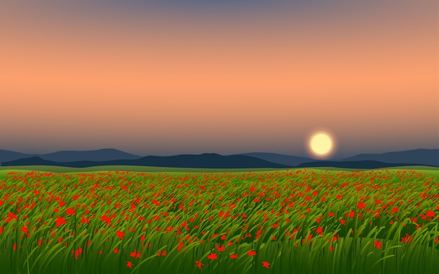Mooi bloemgebied in zonsondergang