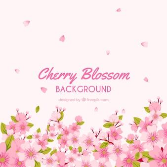 Mooi van de kersenbloesem ontwerp als achtergrond