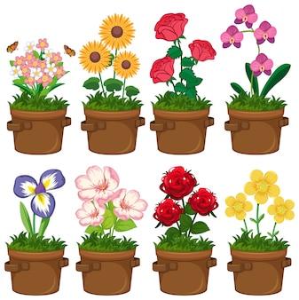 Mooie bloemen in de tuin op een witte achtergrond