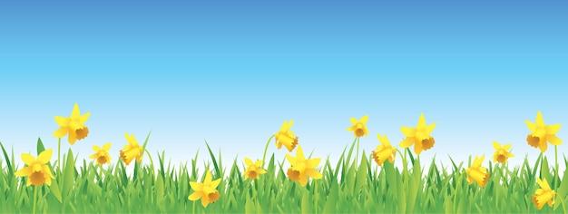 Mooie gele narcissen voor de lente