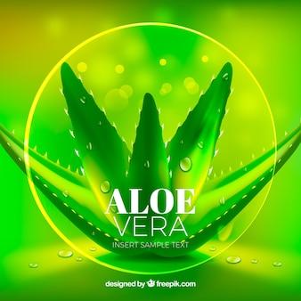 Mooie groene heldere achtergrond van aloë vera
